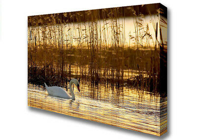 Lonely Swan Lakes Canvas Print Wall Art A1 Size 06277