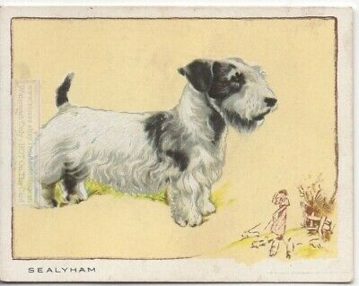 Sealyham Terrier Dog Canine Pet 80+ Y/O Ad Trade Card