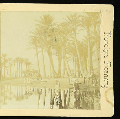 Webster & Albee Foreign Scenery Stereoview Stereoview Bedouin Camp Nile River