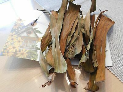 Cleaning & Maintenance Pet Supplies 50 Pcs Dried Banana Leaf For Pet And Aqvariums New