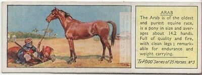Arabian Horse Breed Equine c80 Y/O Trade Ad Card