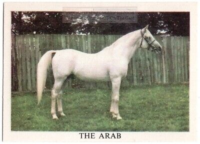 Arabian Horse Breeds Types Of Equines  Vintage Ad Trade Card
