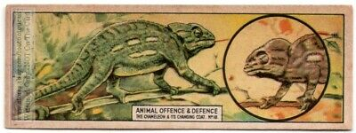 Chameleons Change Color For Camouflage To Blend In c80 Y/O Trade Ad Card