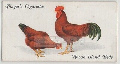 Rhode Island Red Fancy Chicken Poulty Hen Rooster 85+ Y/O Trade Ad Card