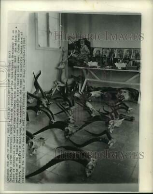 1965 Press Photo Hunting trophies of the late Ernest Hemingway, Havana, Cuba