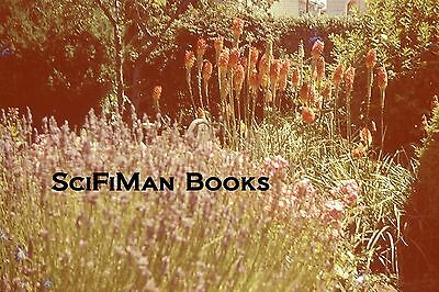 ANSCO COLOR 35mm Slide California Mission Grounds Beautiful Flowers 1940s?