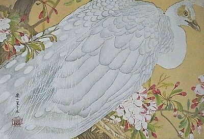 WHITE PEACOCK : by RAKUSAN - Old Art Print of a Japanese Woodblock / Woodcut