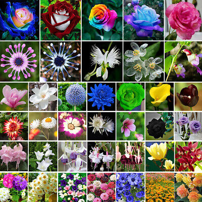 Mixed Colorful Rainbow Rose Flower Seeds Home Garden Decor Plants Multi-Color