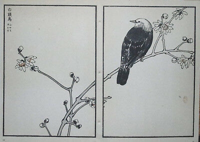 CHESTNUT-CHEEKED STARLING : Print Of a JAPANESE WOODBLOCK Bird Print By BAIREI