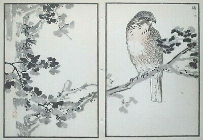 GREY-FACED BUZZARD : Print Of a JAPANESE WOODBLOCK Bird Print By BAIREI