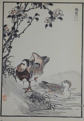 MANDARIN DUCK : Print Of a 1880s JAPANESE WOODBLOCK Bird Print By KONO BAIREI