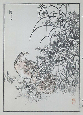 THE QUAIL : Print Of a 1880s JAPANESE WOODBLOCK Bird Print By BAIREI