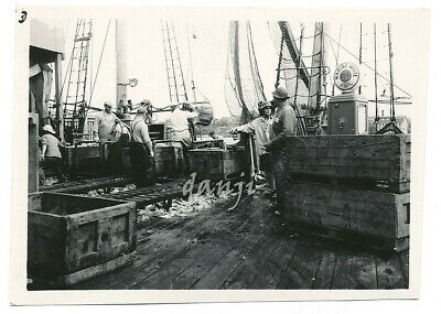 FISHERMEN on a FISHING BOAT with NETS+FISH CATCH+GULF GAS PUMP* old Photo