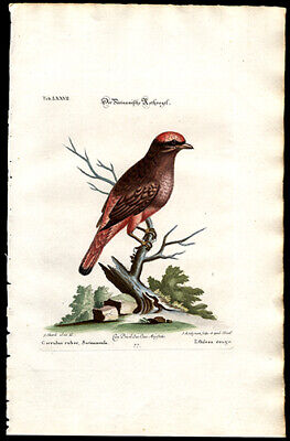 1749 Edwards & Seligmann Hand-Colored Engraving Suriname Roller Watermarked