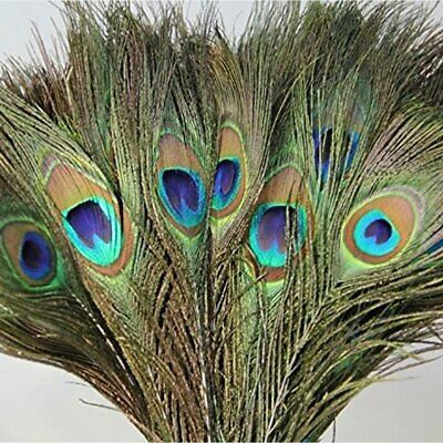 3 x Peacock Feathers Tail Natural 10-12inch Long Craft Bouquet DIY Decoration