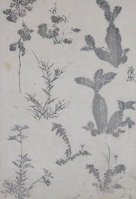 HOKUSAI MANGA - VARIOUS PLANTS & FERNS - Genuine Woodblock Print (Woodcut)