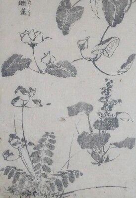 HOKUSAI MANGA - VARIOUS PLANTS - Genuine Woodblock Print (Woodcut)