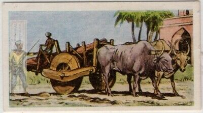 Ox Cart Used As Transport India China Vintage Ad Card