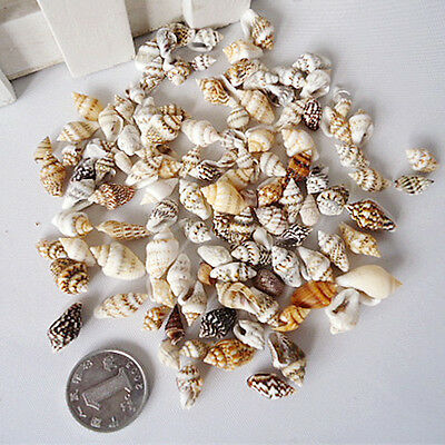 50g Craft Assorted Sea Shells Natural Beach / Seashells Mixed Mini Aquarium DIY