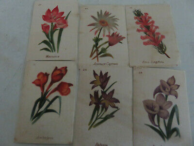 Silk Cigarette Cards. South African Flowers x 33