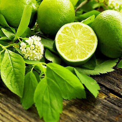 French Lime Blossom Fragrance Oil, Candle Wax Melt Scents Soap Perfume Bath Bomb