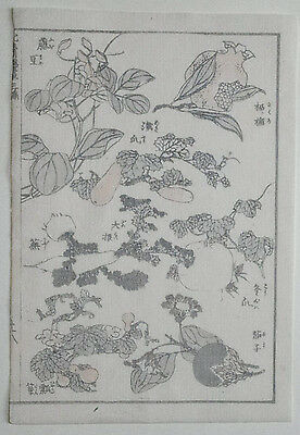 HOKUSAI MANGA : PLANTS & FRUITS : Original Japanese Woodblock Print (Woodcut)