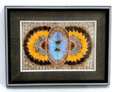 Vintage Butterfly Wing Geometric Framed Art Picture Wall Hanging