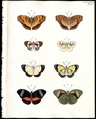Cramer Butterflies 1779 -1791 Copper Plate Engraving Exquisite Hand-Coloring