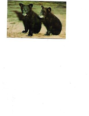 Cobble Hill Puzzle 1000pc  80154 Mama Bear Black Bear w// two cubs
