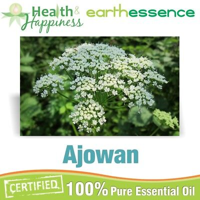 AJOWAN ~ earthessence Certified 100% Pure Essential Oil ~ Aromatherapy