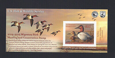 RW81A MNH Federal Duck Stamp - Canvasback  2014 -2015