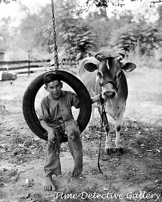 Farm Boy on a Tire Swing with a Cow - 1920s - Vintage Photo Print