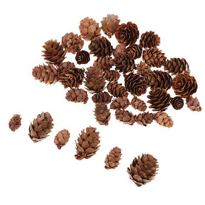 50pcs Assorted Size Natural Pine Cones for Christmas Party Ornament