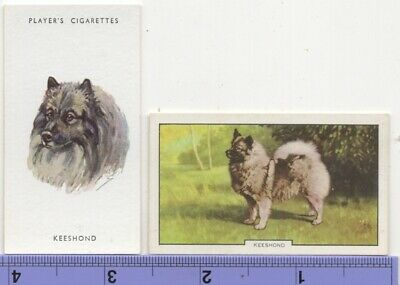 Keeshond  Dog Pet Canine 2 Different Vintage Ad Trade Cards #4