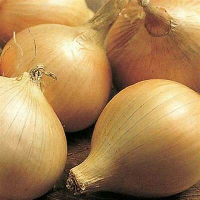 Vegetable Onion Walla Walla 1000 Seeds
