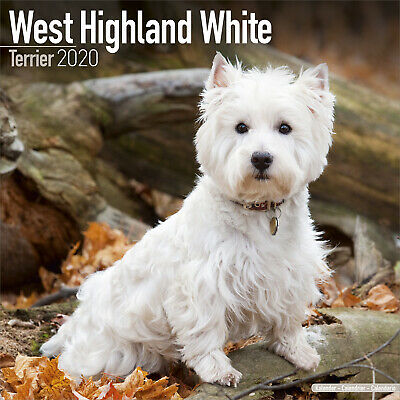 West Highland White Terrier 2020 Westie Dog Calendar 15% OFF MULTI ORDERS