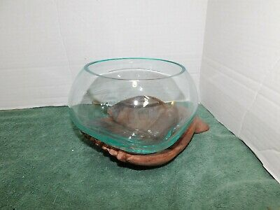 LARGE Hand Blown Molten Glass Fish Bowl or aTerrarium Vase onTeak Wood Hand Palm