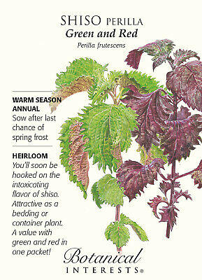 Shiso Perilla Green & Red Seeds - 500 Milligrams