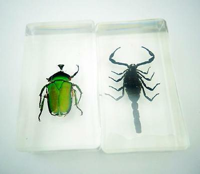 $ 13.99  2 pcs Green Beetle Black Scorpion Insect Specimens In Lucite Paperweigh