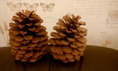 Two Large Pine Cones Natural Christmas 14Cm High X 9Cm Diameter