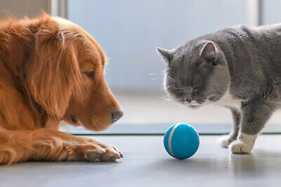 Wicked Ball - Your Pet's Joy when Home Alone UK