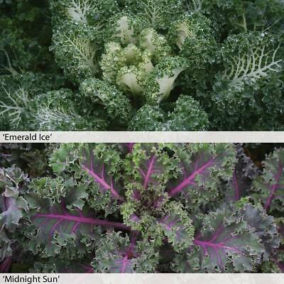 Kale Seeds Hardy Vegetable Garden Plant Duo Mix 2 Packets 1 of Each 20 Seeds T&M