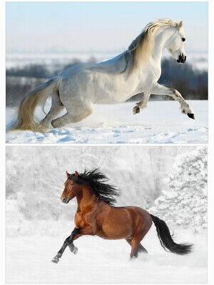 Pack F Pack Of 20 Horse Christmas Cards