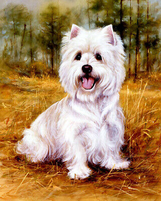 West highland white terrier Oil Painting Giclee Art Printed on canvas L2610