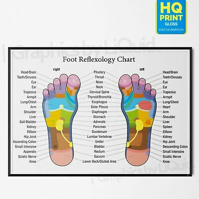 Foot Reflexology Colour Coded Massage Joint Anatomy Chart Poster *Laminate A4 A3