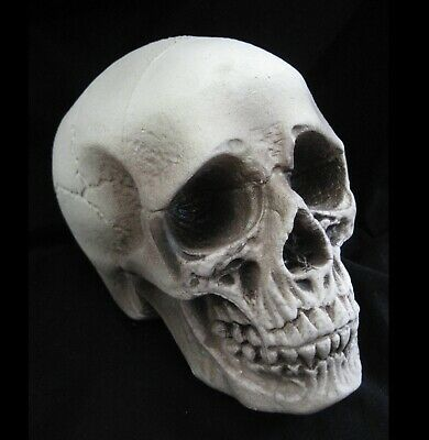 Realistic Lifesize Human Skull Scary Haunted House Halloween Party Prop 8""
