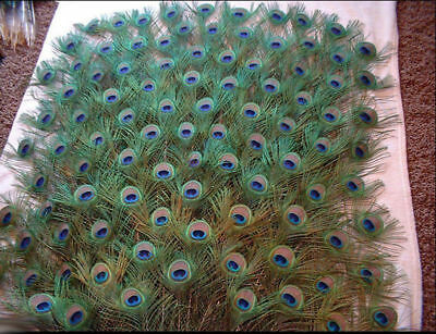 10Pcs Natural Peacock Tail Feathers Party Wedding Clothing Craft DIY Decoration