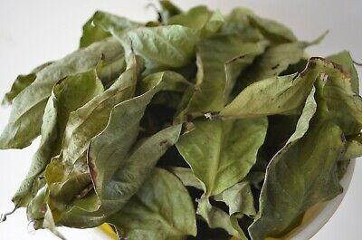 1/2 OZ of B Caapi Banisteriopsis Vine Of Soul DRIED Leaf Leaves Terence McKenna