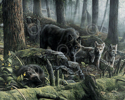 WILDLIFE ART PRINT - Wolves with Wolverine by Kevin Daniel Wolf Poster 11x14