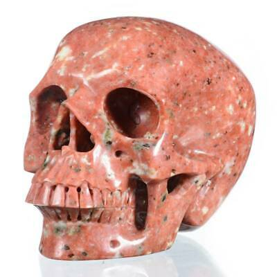 "5.98"" Natural Sesame Red Jasper Crystal Jawless Skull Collectibles #30A33"